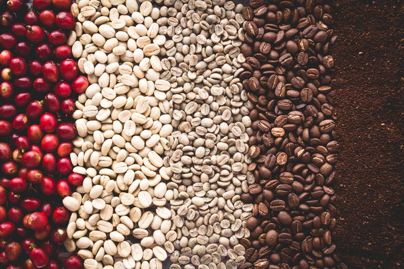 etapy przemiany kawy