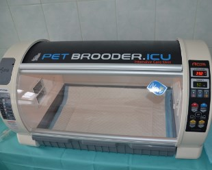 inkubator-1classic-jpg-11952