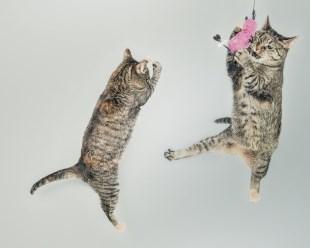 kitten-fur-classic-jpg-11084