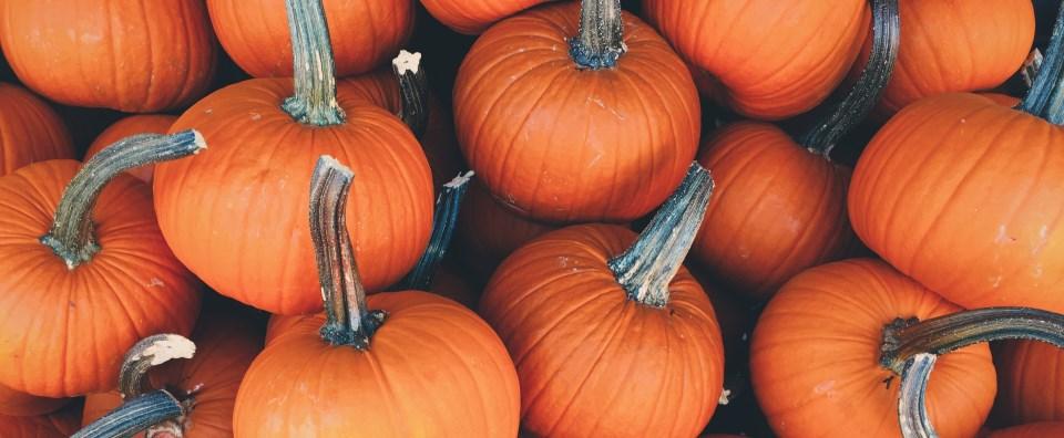 /hamag/assets/pumpkin-slajder-1-jpg-5656.jpeg